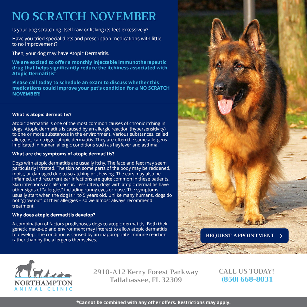 northampton-ac-no-scratch-nov